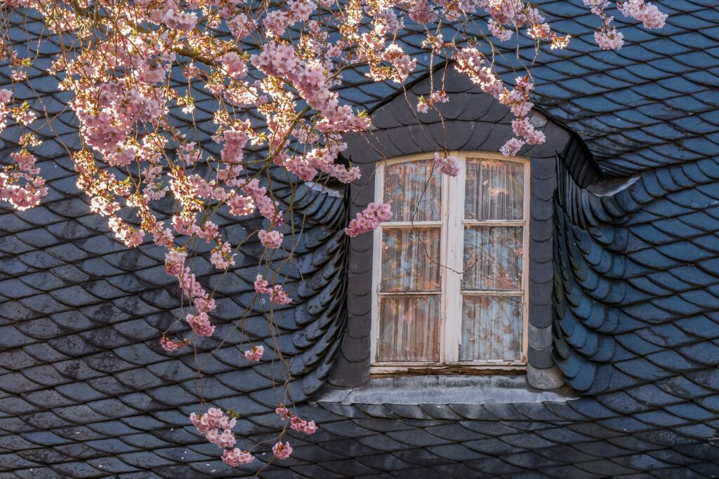 window with blooming pink flowers